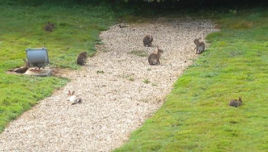 Domaine du Faugeras : des lapins