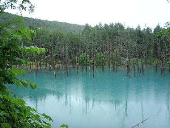 Blue Pond: 雨でしたが、青かったです。