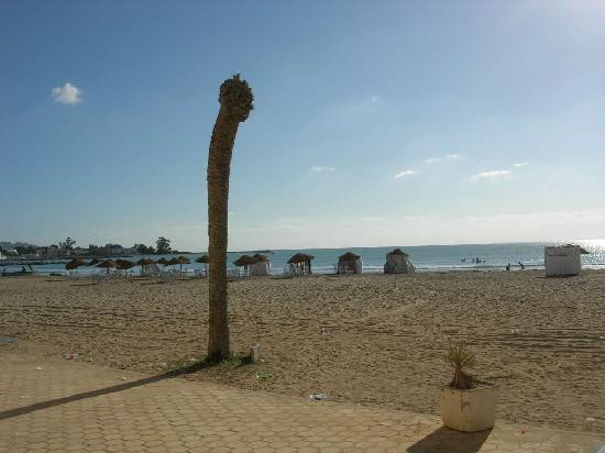 Le palmier du Palm Hotel!