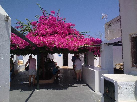 Makris Apartments: Offentlig toilet. Se blomsterne