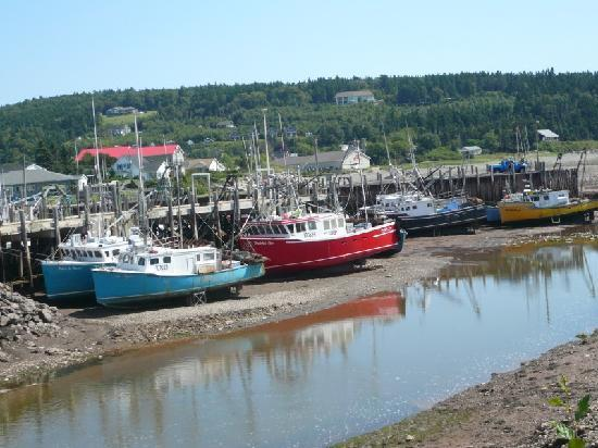 Roads to Sea Guided Tours: Boats in Alma at Low Tide