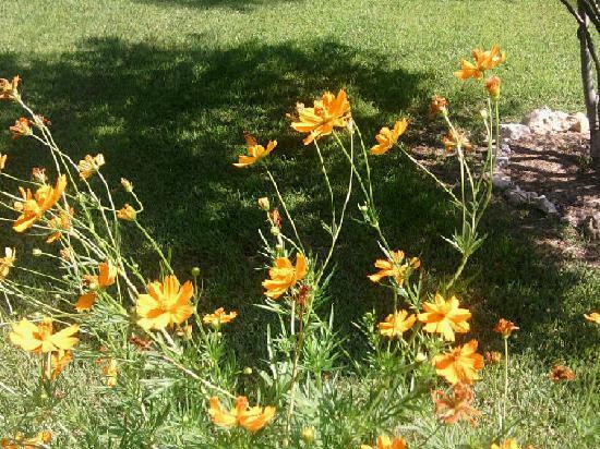 Azalea Plantation: Butterflies