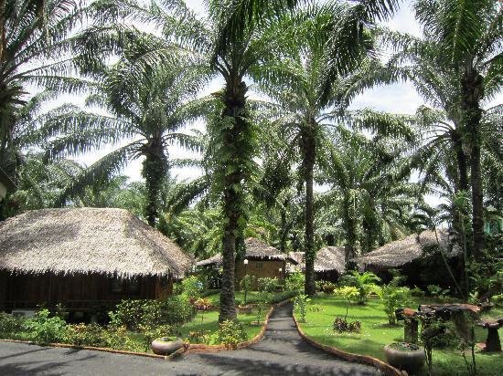 Blue Village Resort: first photo