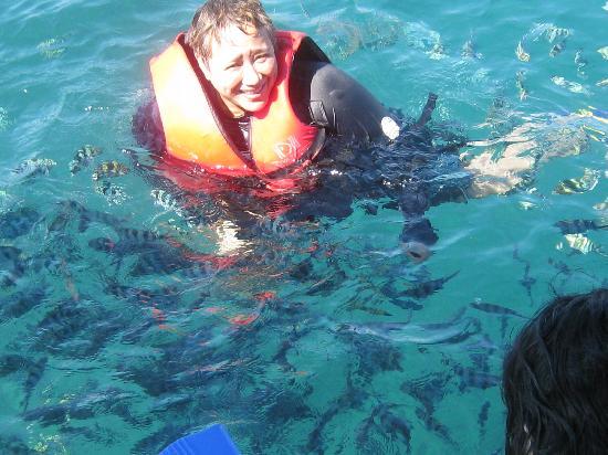 Dos Palmas Island Resort & Spa: diverse marine life