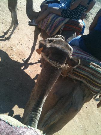 Le Marabout Hotel: ballade en chameaux