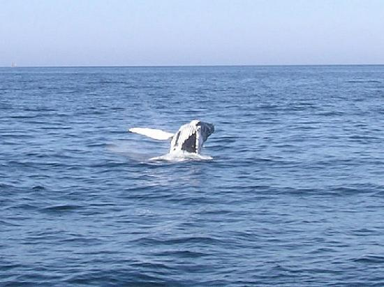 Sally Webster Inn: Whale watching was amazing!