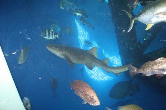 Texas State Aquarium: Shark