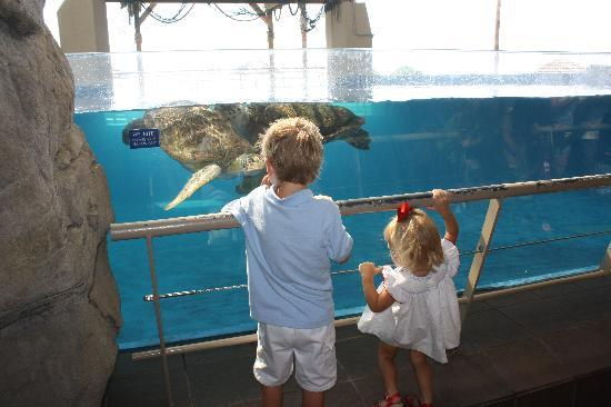 Texas State Aquarium: Turtle