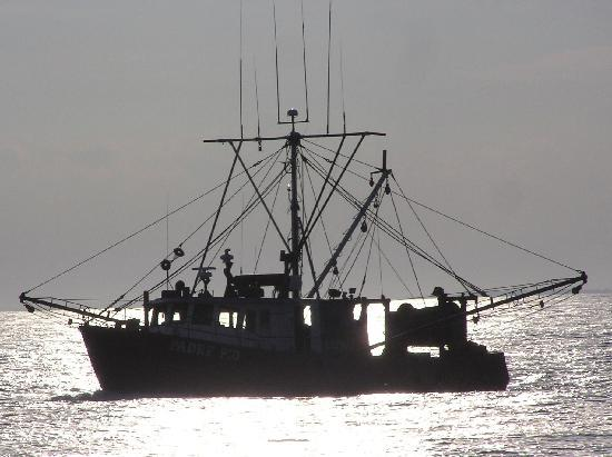 7 Seas Whale Watch: Fishing boat heading out of Gloucester