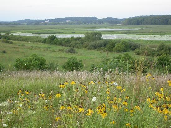 Horicon Marsh: Prairie flowers