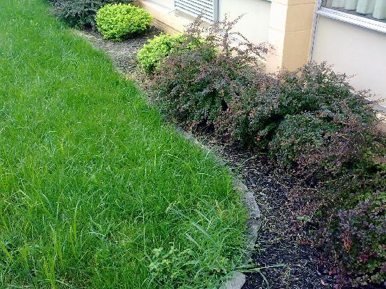 Days Inn Bridgewater Conference Center Somerville Area: Unkept Yard