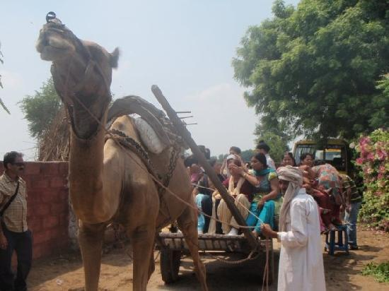 A Village Retreat : Camel Ride
