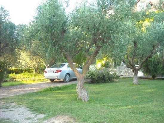Villa Georgina Picture