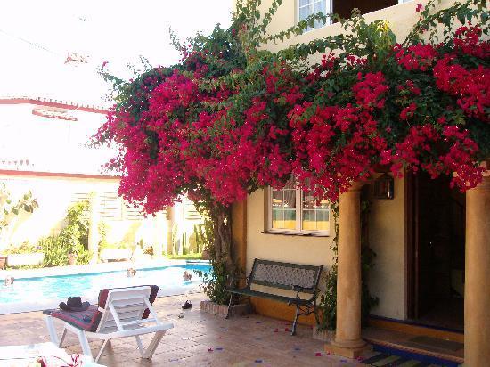 Marbella, Spain: not everything is as nice as it seems