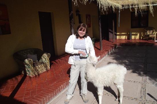 Hostal Pachamama : patricio  y yo