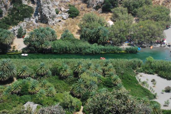 Plakias, Greece: Palm forest