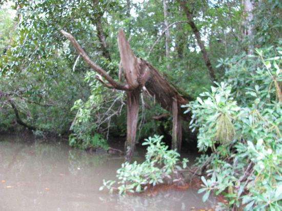 BeachnRiver Canoe and Kayak Rentals : Bon Secour River Foley, AL