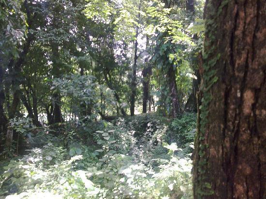 Selva Lacandona. Cascada Misol Ha. Chiapas. México