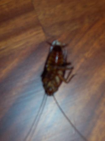 Anantara Hua Hin Resort : propretée insuf atten insectes ds chambre