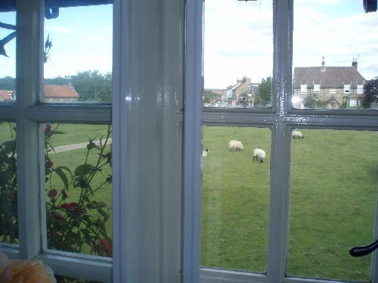 Mulgrave Cottage : The view from our window....