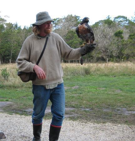 Radical Raptors: Dennis and falcon