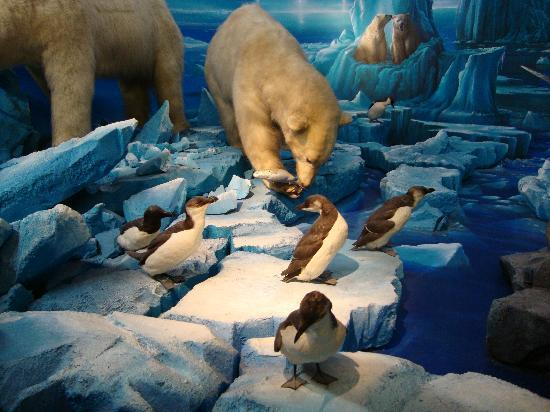 Museum of Natural History (Museum d'Histoire naturelle): Some like it COLD!