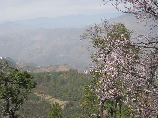 Dehradun, India: mussoorie