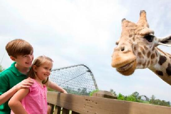 Wild Adventures Theme Park: Disover exotic animals at our animal interactions throughout the park.