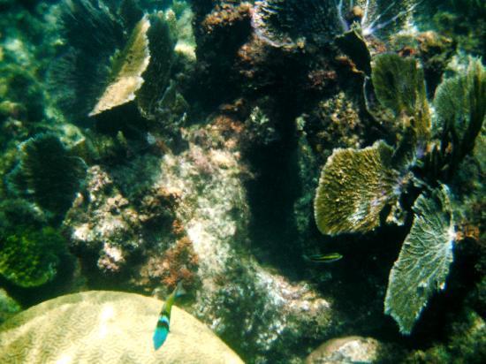Grand Sirenis Riviera Maya Resort & Spa: Snorkeling around the rock with the Mayan ruin