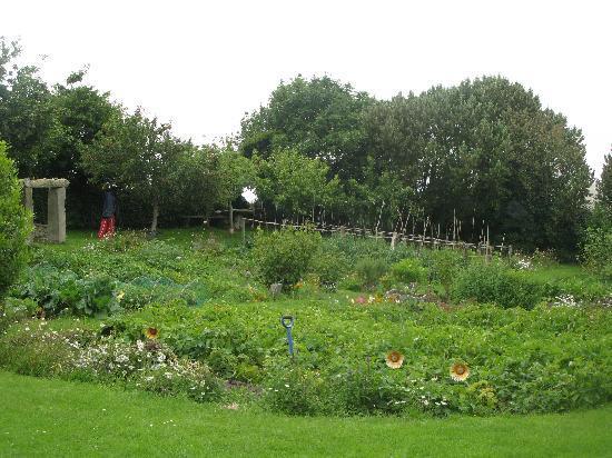 Corcreggan Mill: The lovely garden
