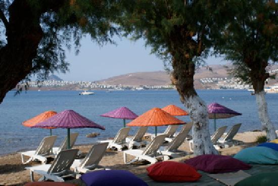 Yilmaz Hotel: Beach