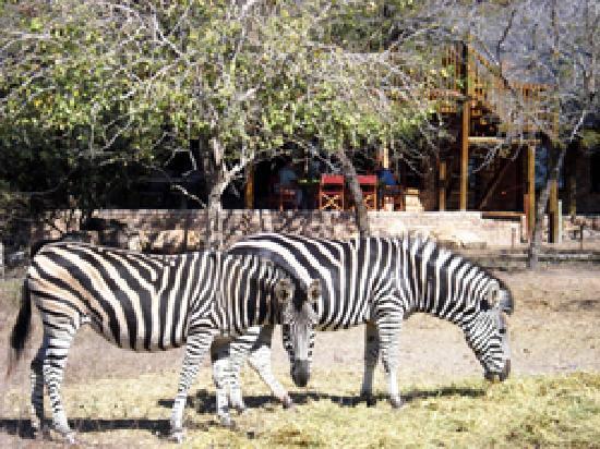 a Zaganaga Kruger Lodge: Visotors at home