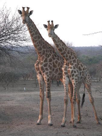 a Zaganaga Kruger Lodge: More visitors