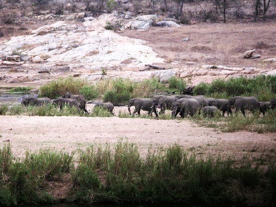 a Zaganaga Kruger Lodge: Big 5 on your Hike