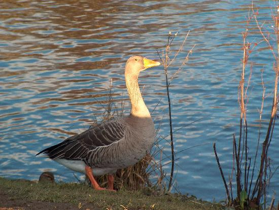 Haddo House & Country Park: You are being watched