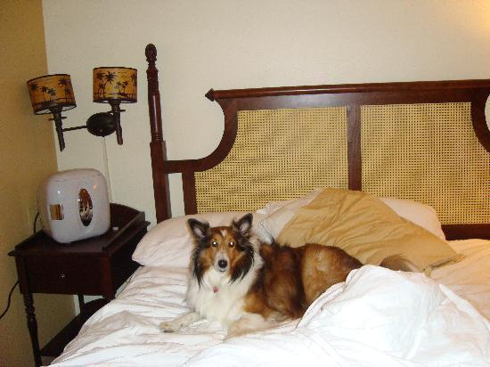 Loews Royal Pacific Resort at Universal Orlando: Our dog enjoying her vacation