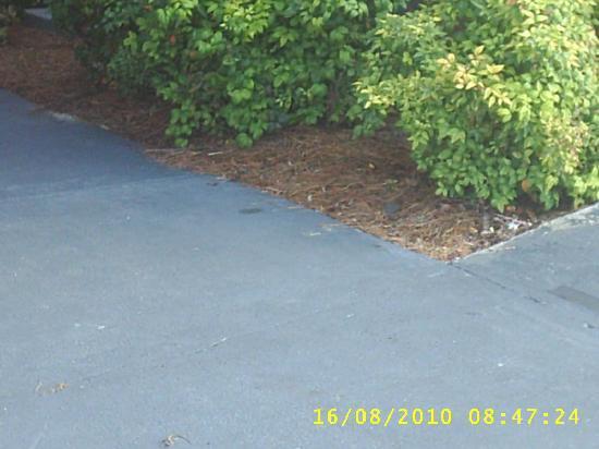 Howard Johnson Valdosta: look real close in lower area for lizard