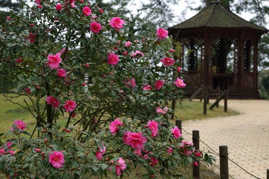Oshima Park: 公園内にはいろいろな種類の椿が植えられています。