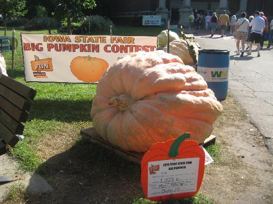 Des Moines, IA : Biggest Pumpkin