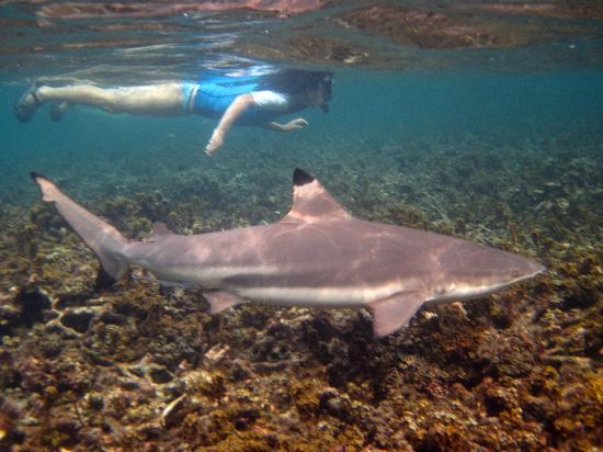 Haadtien Beach Resort: Swimming with the sharks