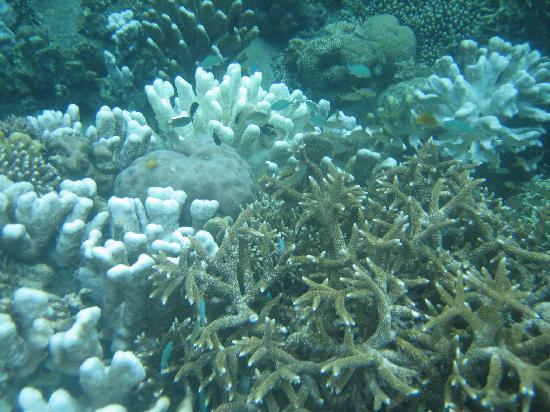Bambu Villa Resort: Corals and fishes 5km away.