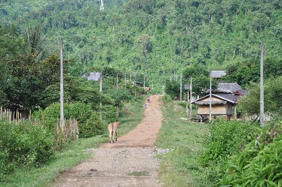 Vang Vieng Eco Lodge: Road to Eco-Lodge