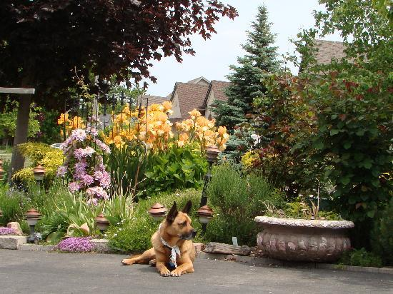 Hoppy's Bed & Breakfast : Odie- our welcome mascot. A one of a kind breed