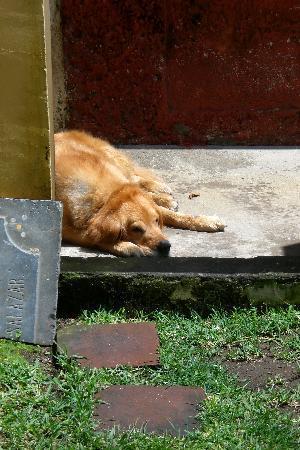 Posada Don Diego: Wachhund
