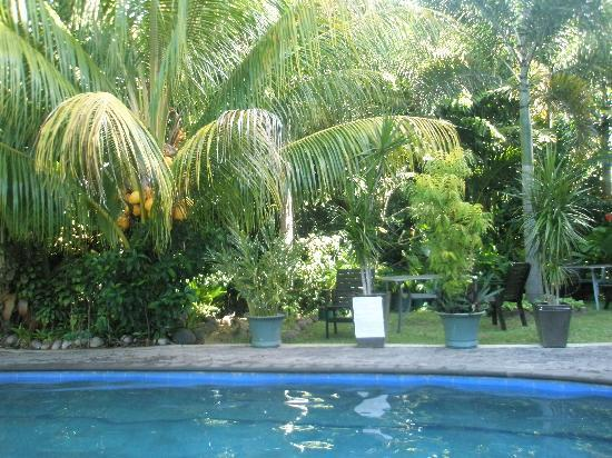 Le Alaimoana Hotel: Tropical garden next to the pool