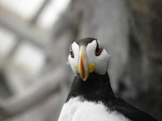 Seward, AK: Teh Puffins liked the tour