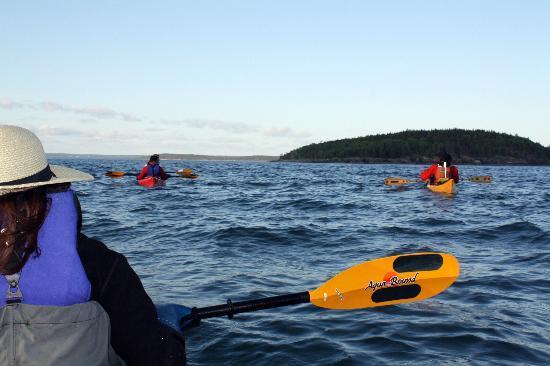 Acadia Park Kayak Tours: paddling