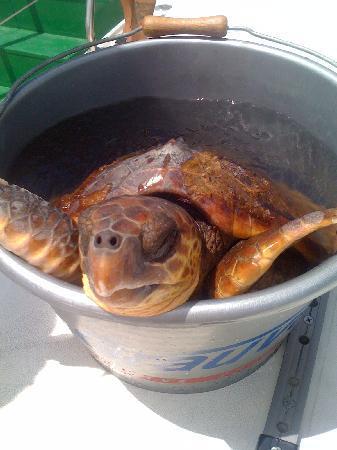 Eden Catamaran: the saved turtle