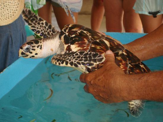 Posada Movida: ...si nuota con le tartarughe