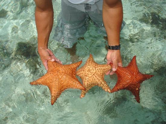 Posada Movida: ....tra le stelle marine....